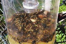 Likvidace hmyzu,vos...