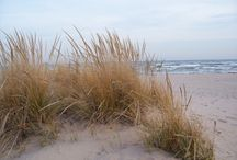 Plaża / Trawy na plaży