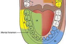 Dentalhigiene