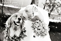 Pets & Weddings / Everyone wants their fur baby there on the most important day of their life!