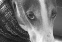 Greyhounds / by The Canny Nana