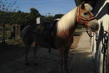 Mes photos de chevaux