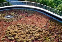 Gärten und Grünflächen / Unsere Haupttätigkeiten liegen in den Bereichen Verlegung von Rollrasen sowie Dachbegrünungen jeder Art. Gerne setzen wir auch Ihre individuellen Ideen zur Gestaltung Ihres Gartens oder Ihrer Parkanlage um, und beraten und betreuen Sie dabei fachkundig.