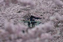 Japan 2015 / Vakantie