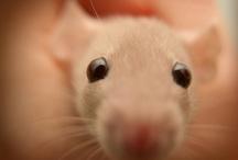 pets / by Kris Rrbinson