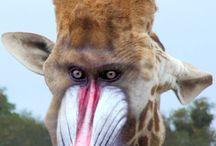 Fantasie dieren / Fantasie dieren