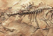 fossils / by Steven Sherman