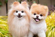 Animals / Wij inspireren je met verzorgingstips, schattige diertjes én leuke weetjes.