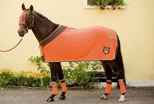 chevaux couverture