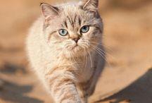 Cute Cat Other