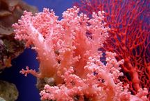 CORALS & SHELLS / CORAL IS BELIEVED TO EXCITE BRILLIANCY AND GLADNESS. / by Silvia M. Kahler