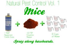 Pest Control for Mice / Get rid of mice