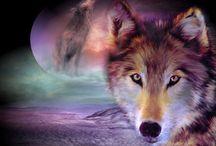 Wolves / sudet