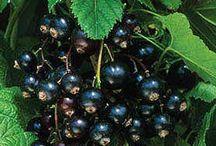 Fruit growing tips