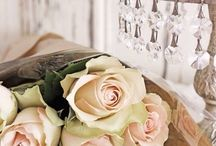 rózsák / roses