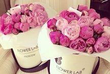Kwiaty w pudełkach