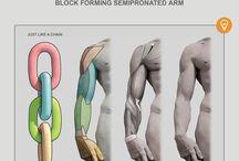02.anatomy