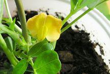 Pflanzen selbstziehen