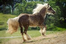 Handsome Horses / Only truly beautiful horses, ponies, unicorns and Pegasus and and and