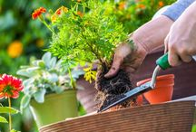 Get It Growing! / https://getitgrowing.wordpress.com/ Sustainable Gardening.