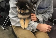 Yeontan / Sorry, I just love Yeontan so much I had to make a board for him :3
