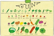 fruits légumes de saison