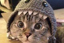 Sirin kediler
