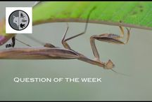 Test your knowledge with the question of the week each Friday / Question on wildlife of Eastern North America. Test your knowledge with the question of the week each Friday. The answer will be released next Friday. Your comments are welcome ! Join Films Nature web TV on Youtube to see web series on wildlife. Subscribe to miss nothing : https://www.youtube.com/user/Explorationnature