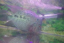 Fish Keeping , aquarium hobby