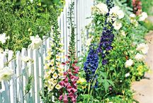 Gardening: White Picket Fences