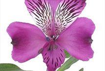 71. Orchideeën. / Overal vandaan.