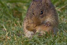 Mice / by Boo Jay