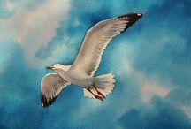 beautiful seagull background