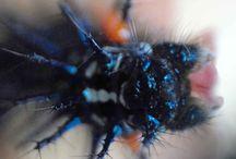 My Macrology Photography / caterpillars