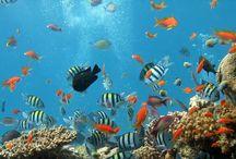 θαλασσα-πανελ