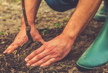 Tree Planting Tips / The best tips on how to plant your trees and ensure their longevity.