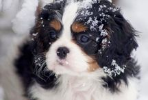 Puppy! / by Sara Iannuzzi