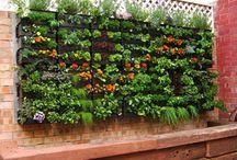 Outdoor garden and deck