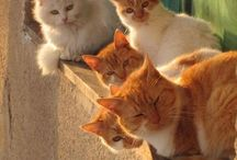 Koty / Dla Joanny i Agaty