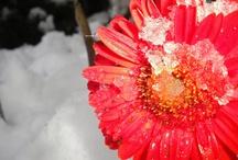 I love flowers!!