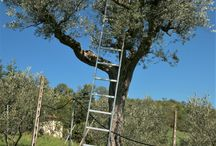 Harvest Time / Photos from the Nudo groves at harvest time