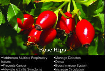 Dr. Moms Herbal Spotlight