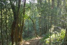 Trail Run & MTB at Ingeli / Ingeli Forest Lodge and its beautiful surrounds offer a trail running paradise and MTB paradise!   Incorporating the best features of mountain terrain, forest paths, natural bush, waterfalls and streams, this race offers variety and brilliant scenery!