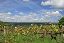 Finger Lakes Wine Country  / Wine Country in NY State