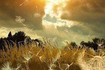 Mooie natuur plaatjes