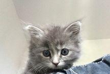 Mes chats / Yuki bébé