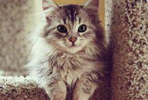 Cat Lady / cat, kittens, kitty, feline, tiger, pet / by Tessa