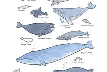 Whales