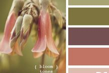 Color Inspiration  / by Stephanie Gibson