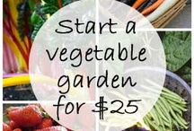 Gardening - veggies / How to start veg garden